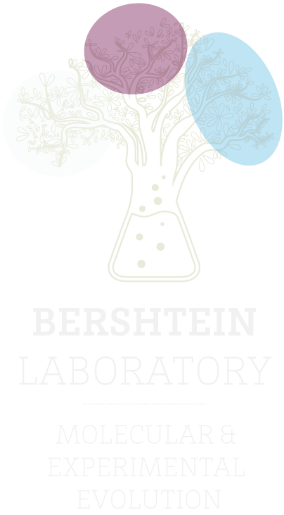 The Bershtein lab | Shimon Bershtein | Ben-Gurion University of the Negev